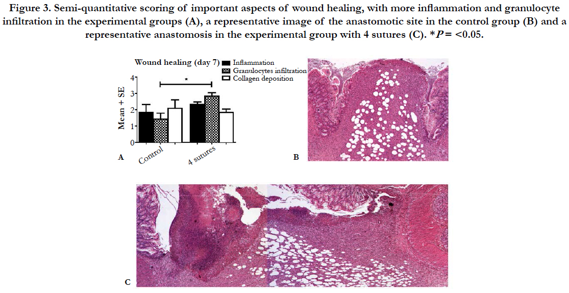 Colorectal Anastomotic Leakage: A new, Validated Rat Model